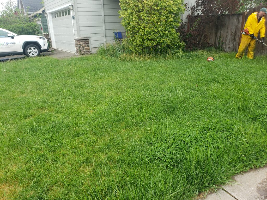 west eugene front yard before