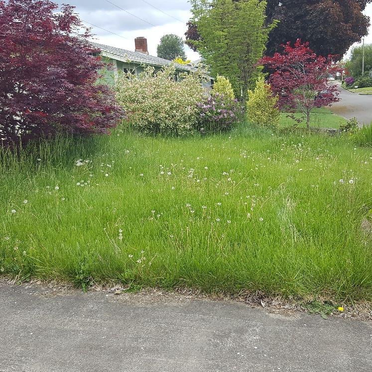 santa clara yard before